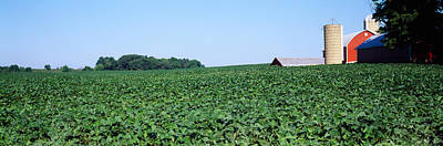 Soybean Field With A Barn Art Print by Panoramic Images