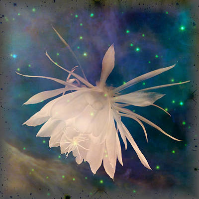 Aretha Franklin - Space Moon Flower by Tanya Hamell