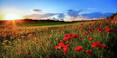 Photograph - Spain, Menorca, Field Of Poppy Flowers by Westend61