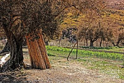 Photograph - Spains Countryside by Jackie Mestrom