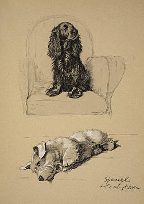 Cocker Spaniel Drawing - Spaniel And Sealyham, 1930 by Cecil Charles Windsor Aldin