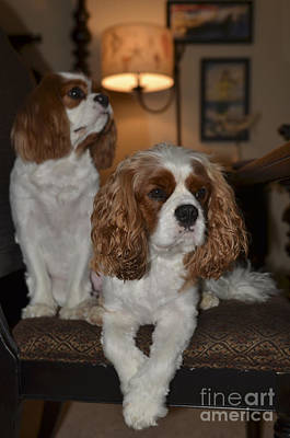 Photograph - Spaniels by Dale Powell