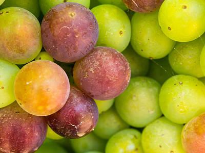 Justin Woodhouse Photograph - Spanish Grapes Macro by Kaleidoscopik Photography