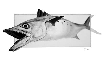 Drawing - Spanish Mackerel - Pencil by Hayden Hammond