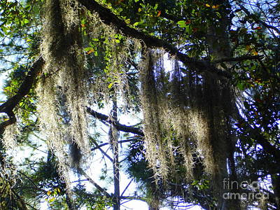 Photograph - Spanish Moss 4 by Lew Davis
