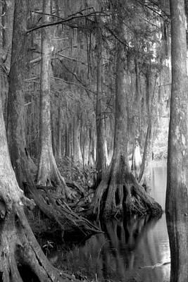 Spanish Moss And Pond Cypress. Shingle Creek. Art Print