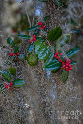 Photograph - Spanish Moss And Red Berries by Dale Powell