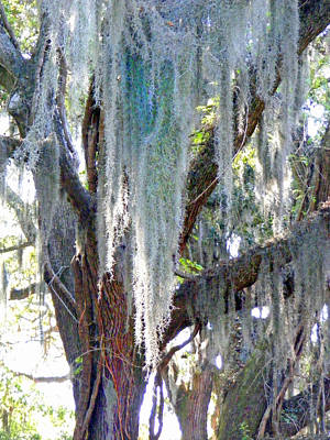 Photograph - Spanish Moss by Duane McCullough