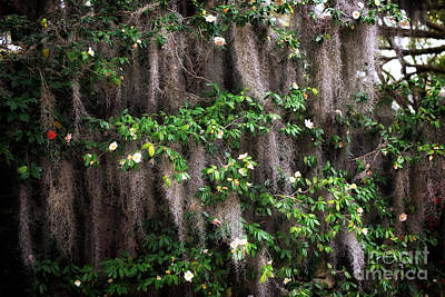 Photograph - Spanish Moss Flowers by John Rizzuto