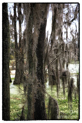 Photograph - Spanish Moss In The Swamp by John Rizzuto