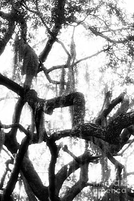 Savannah Fine Art . Savannah Old Trees Photograph - Spanish Moss by John Rizzuto