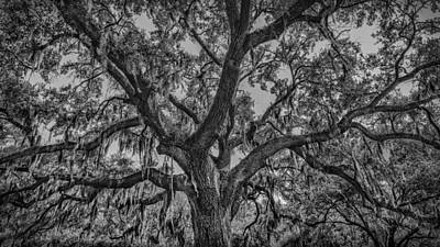 Savannah Fine Art . Savannah Old Trees Photograph - Spanish Moss by Kristen Meister