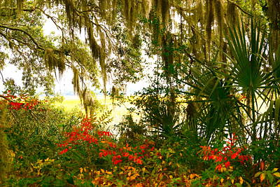 Spanish Moss Of Beaufort 1 Art Print