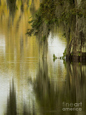 Spanish Moss Reflections Art Print by Kelly Morvant