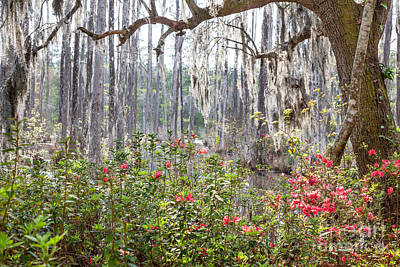 Photograph - Spanish Moss by Susan Cole Kelly