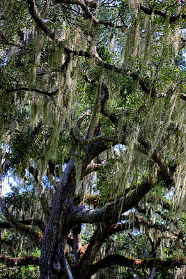 Spanish Moss Original by William Tucker