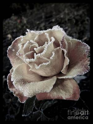 Photograph - Spanish Rose by Jamie Johnson