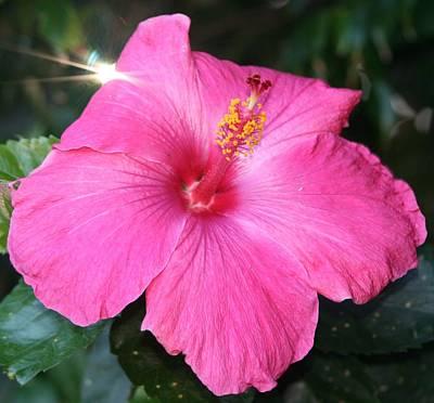 Photograph - Spark Of Light Flower by Phoenix De Vries
