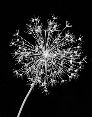 Skelton Photograph - Sparkling Bw by Steve Harrington