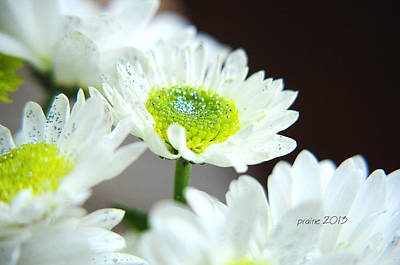 Photograph - Sparkling Daisies by Patti Raine
