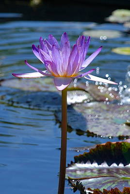 Sparkling Purple Water Lily Art Print by M E Wood