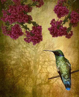 Digital Art - Sparkling Violet Ear Hummingbird by Susan Candelario