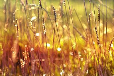 Sparkling Wet Grass In The Sunlight Art Print by Anne Macdonald
