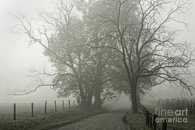 Photograph - Sparks Lane Fog by David Waldrop