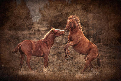 Forelock Photograph - Sparring Yearlings D8994 by Wes and Dotty Weber