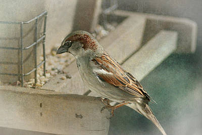 Photograph - Sparrow 1  by Susan  McMenamin