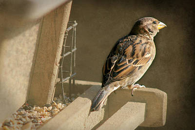 Photograph - Sparrow 2  by Susan  McMenamin