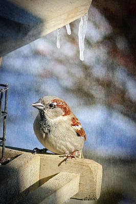 Photograph - Sparrow 5   by Susan  McMenamin