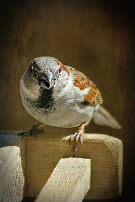 Photograph - Sparrow 8 by Susan McMenamin