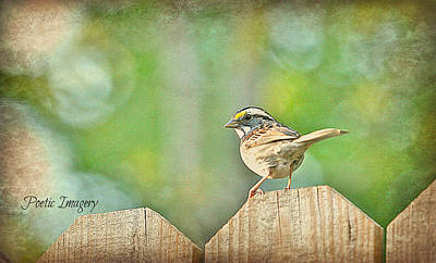 Photograph - Sparrow by Debbie Sikes