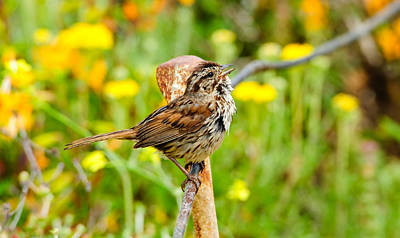 Photograph - Sparrow by Don and Bonnie Fink