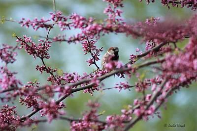 Sparrow In A Red Bud Print by Jackie Novak