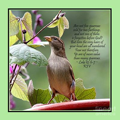 Sparrow Inspiration From The Book Of Luke Art Print by Catherine Sherman
