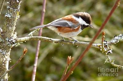 Winter Animals - Sparrow by Lena Photo Art