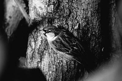 Sparrow On A Tree Art Print by Pati Photography