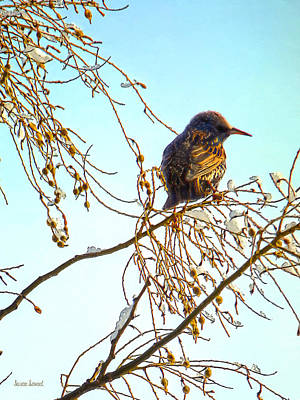 Photograph - Sparrow On A Winter Branch by Susan Savad
