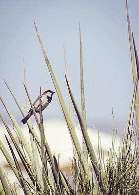 Photograph - Sparrow On The Yucca by Heather Applegate