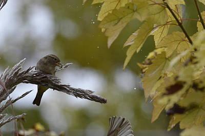 Photograph - Sparrow Pampas 11 by Rae Ann  M Garrett