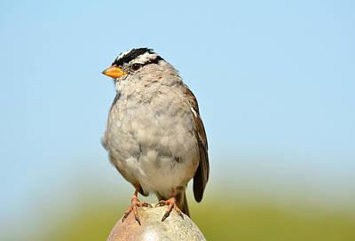Photograph - Sparrow Song 10 by Fraida Gutovich