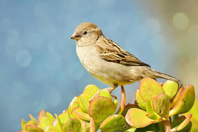 Photograph - Sparrow Song 12 by Fraida Gutovich