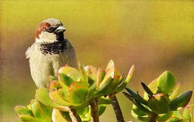 Photograph - Sparrow Song 3 by Fraida Gutovich