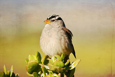 Photograph - Sparrow Song 6 by Fraida Gutovich