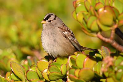 Photograph - Sparrow Song 7 by Fraida Gutovich