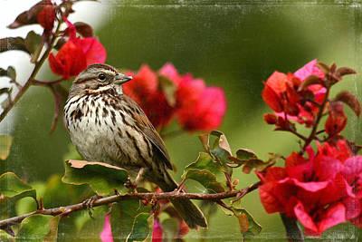 Photograph - Sparrow Song 8 by Fraida Gutovich