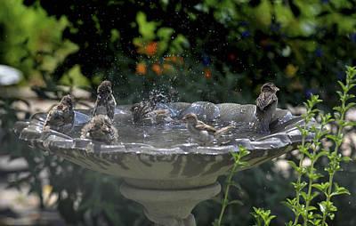 Photograph - Sparrow Spring Bath by Rae Ann  M Garrett