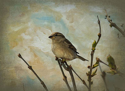 Photograph - Sparrow Watching by Trudy Wilkerson